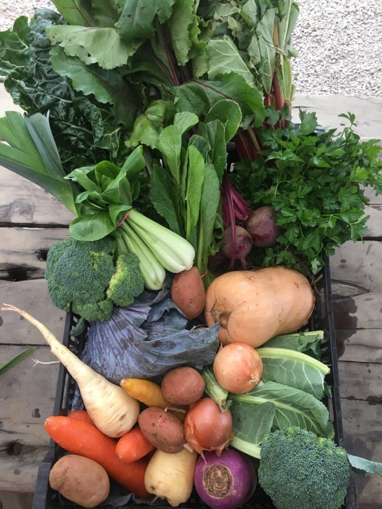 Vegetable Box: Large Box