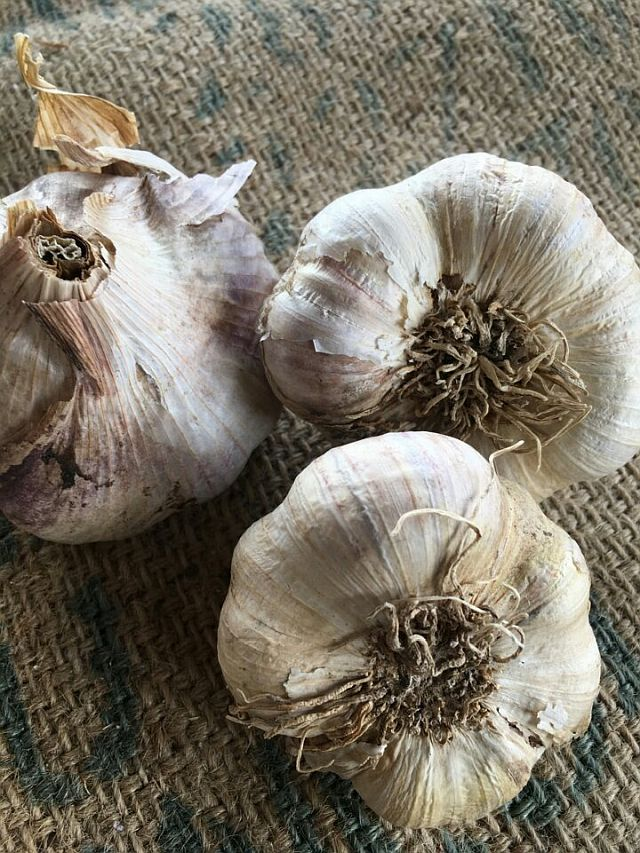 Local Garlic Pesticide Free